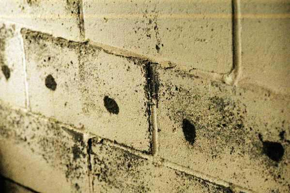 Termite Treatment Evidence in Hollow Block